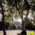 Die Stadt der Zukunft aus Sicht eines Baumes